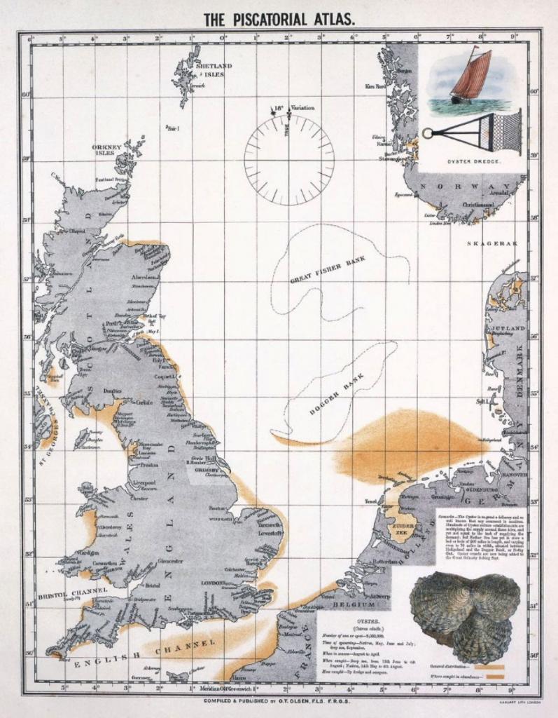 platte oester Noordzee